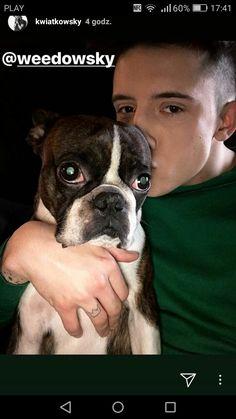 Boston Terrier, Idol, Animals, David, Angel, Boston Terriers, Animales, Animaux, Animal