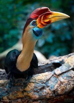 Natur und Umwelt - german.china.org.cn - Bunte Vögel aus aller Welt