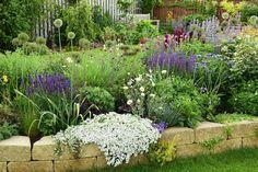 Život v zahradě: Trvalkový záhon