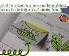 Kate's Science Classroom Cafe: Photosynthesis for Interactive Notebooks
