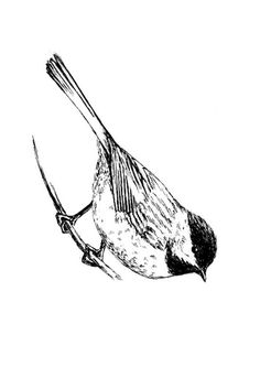Coloring Page bird Bird Coloring Pages, Free Coloring Sheets, Pictures, Image, Photos, Grimm