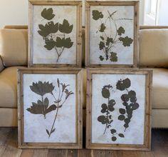 ressed Botanical Prints Antique Farm House