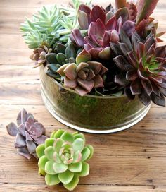 Monday #Musing : Add a fresh succulent garden to your office!