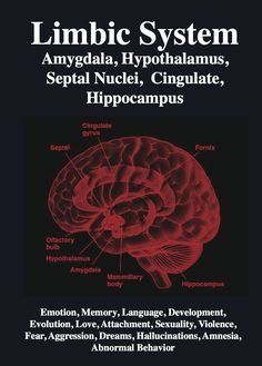 The limbic system contains glands which help relay emotions. Many hormonal responses that the body generates are initiated in this area. The limbic system includes the amygdala, hippocampus, hypothalamus and thalamus.