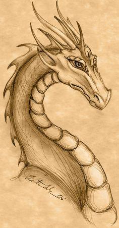 Dragon Drawing by Terrizae