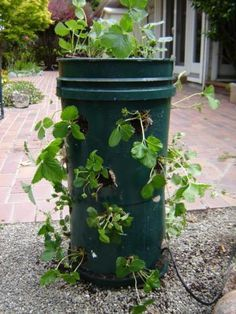 How to Build a Strawberry Tower - use when you have limited space for a strawberry bed