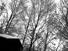 Winter trees at the back of my home