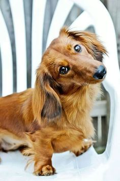 The head tilt... reminds me of my Pepperoncini AKA The Bean, Fluffy, Chabeaner or any derivative there of LOL