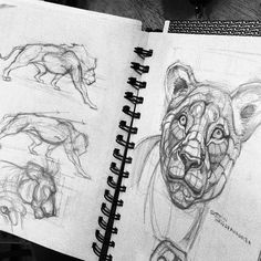 Lion Head And Body Anatomy by thamzmasterpiece