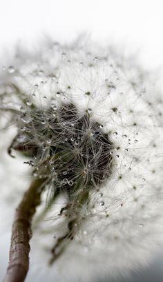 Icelandic Flora