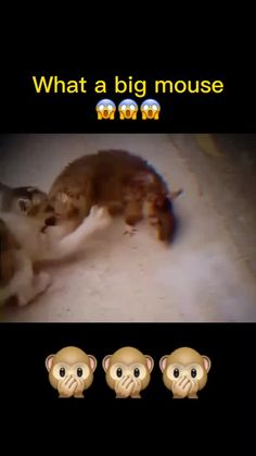 ada(@keke8860) on TikTok: Did i do it right? Promise me to watch the end! #cat #foryou