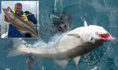 Seal involved in ten minute tug of war with fisherman over catch  http://www.dailymail.co.uk/news/article-2959304/Juicy-fish-supper-ll-fight-Hungry-seal-involved-ten-minute-tug-war-fisherman-pollock-catch.html