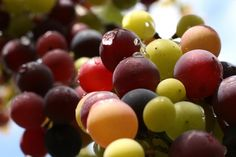 WineCAST: The Color of Wine- What can it tell you?  http://bit.ly/y0bhE7
