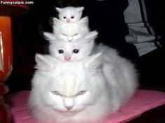 "New ""stackable cats"" .... they almost look real :)"