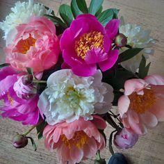 Juni 2015 #DadaDesign #Agentur #Bonn #Blumen #Flowers #bunt #StilieundBlüte