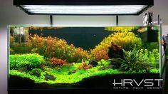 See more in the All Things Aquaria board: https://www.pinterest.com/JibinAbraham/all-things-aquaria/
