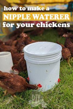 Herb Garden In Kitchen, Kitchen Herbs, Chicken Feed, Diy Chicken Coop, Keeping Chickens, Raising Chickens, Pet Chickens, Chickens Backyard, Raising Farm Animals