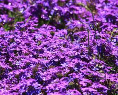 things that are purple in color -