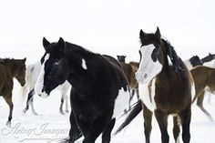 Snow Day at Black Hills Wild Horse Sanctuary - Living Images