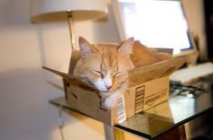 """Stig in a box.  (love the """"fits it ships"""" comment)"""