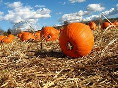 Harvest time!!!!
