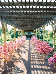 Spring time at Clark Gardens' Rose Pavilion. Photo Credit - Ben Q Photography Clark Gardens, Garden S, Best Day Ever, Pavilion, Spring Time, Photo Credit, Pergola, Outdoor Structures, Rose