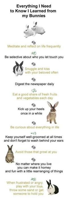 Wise advice learned through bunny ownership