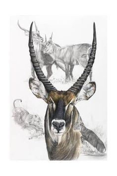 Barbara Keith 'Waterbuck' Canvas Art in. W x 47 in. H), White Abstract Canvas, Canvas Art Prints, Framed Canvas, Framed Prints, Wildlife Art, Wildlife Paintings, Animal Paintings, Cute Animal Drawings, Pet Portraits
