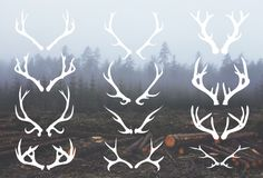 Check out Deer Antlers - 12 Hand Drawn Vectors by cardcandy on Creative Market