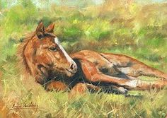 Animal Paintings: David Stribbling - Featured Images - Foal  by David Stribbling