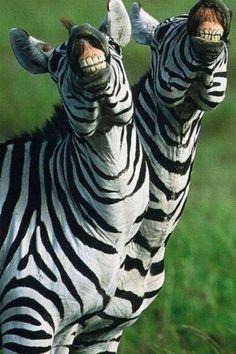 "Онлайн психолог домашних питомцев - animal psychology https://www.facebook.com/animal.psychology Психолог онлайн. ""Психология личного пространства"" http://psychologieshomo.ru   Smile"