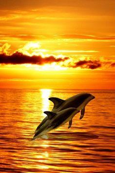 dolphins www.SELLaBIZ.gr ΠΩΛΗΣΕΙΣ ΕΠΙΧΕΙΡΗΣΕΩΝ ΔΩΡΕΑΝ ΑΓΓΕΛΙΕΣ ΠΩΛΗΣΗΣ ΕΠΙΧΕΙΡΗΣΗΣ BUSINESS FOR SALE FREE OF CHARGE PUBLICATION
