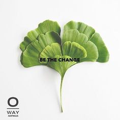 We are committed to fair trade we take care of the environment we use natural plant based ingredients over chemicals we grow a collection of 0km crops for essential oils. We are making a change for the better. #oway #owayaustralia #changeforthebetter #greenchemistry #loveyourplant