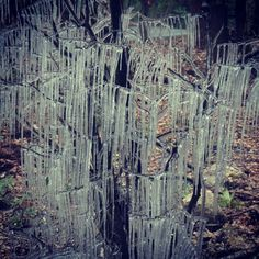 Have you noticed the latest natural art phenomenon? I keep spotting them everywhere- icicles on trees and shrubs caused by cars making splashes when driving through large puddles. by Ayegardening, via Flickr