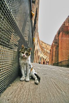 one of my all-time favourite #cat pictures. a stray in rome taken by toshio.