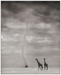 Stunning. Not uncommon to see dust devils on the plains or dry savannah regions of Africa.