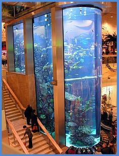 26 Best Home Stairs Design Ideas With Aquarium - Aquarium decorations have the tendency to look rigid and lifeless. If you look at the various types of fish tank decorations sold, they mainly depict . Aquarium Design, Big Aquarium, Aquarium Terrarium, Home Aquarium, Aquarium Fish Tank, Reef Aquarium, Aquariums Super, Amazing Aquariums, Tanked Aquariums