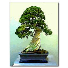 Bonsai Cypress Tree Cards! :) http://www.zazzle.com/bonsai_cypress_tree_post_cards-239179255824358830?rf=238020180027550641
