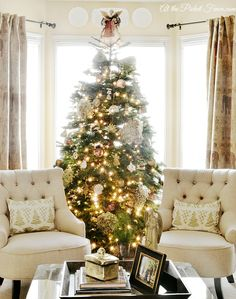 Tree flanked with chairs.
