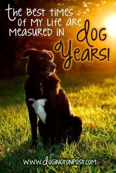 The best times of my life are measured in dog years.