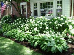 Plan for the future when you are old and cannot do gardening (or you are lazy right now, but like nice exteriors. This is the easiest scenario: Hydrangeas and Hostas.. #LandscapingIdeas