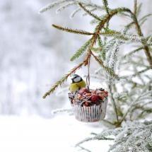 Winter Feast...