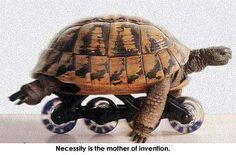 My fav animal! Love turtles!