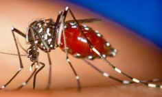The CELESTIAL Convergence: PLAGUES & PESTILENCES: Mysterious And Incurable Chikungunya Virus Continues To Spread - Now Confirmed In 15 American States, Including New York, With 25 In Florida Alone... 6/16/2014