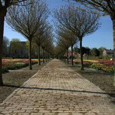 Hortus Bulborum Limmen