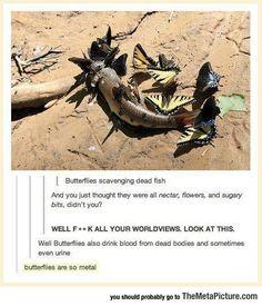Butterflies Are So Metal