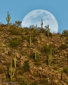 Bad Moon On The Rise - Tucson, Arizona