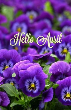 Hello April Images, Pictures, Quotes, and Pics Seasons Months, Days And Months, Months In A Year, Four Seasons, April Images, Calendar Wallpaper, New Month, Image Notes, Gardens