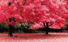 Αποτέλεσμα εικόνας για simple scenery for theatre  trees and benches