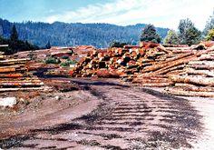 Lumber Mills in Northern California